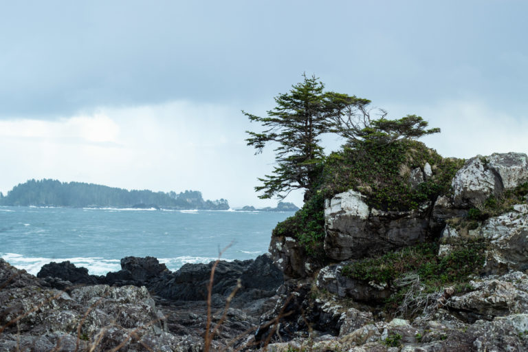 Ucluelet is Never A Bad Idea